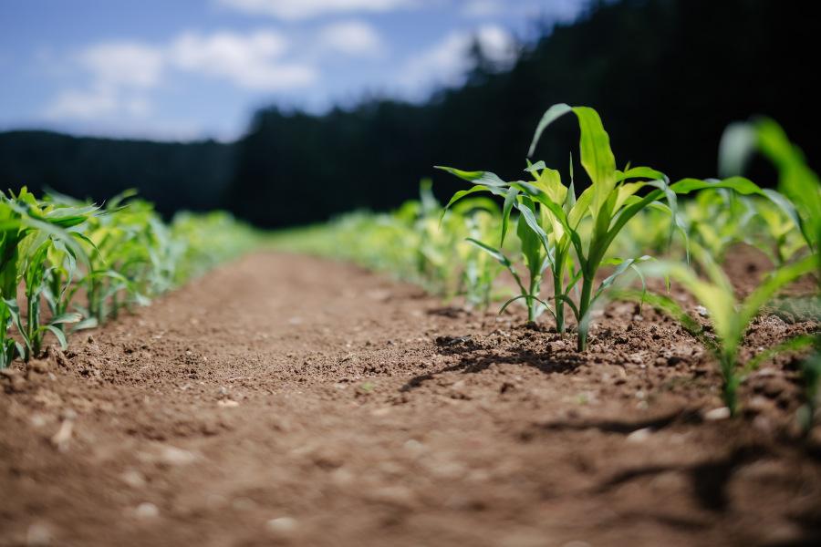 Blockchain settore agroalimentare