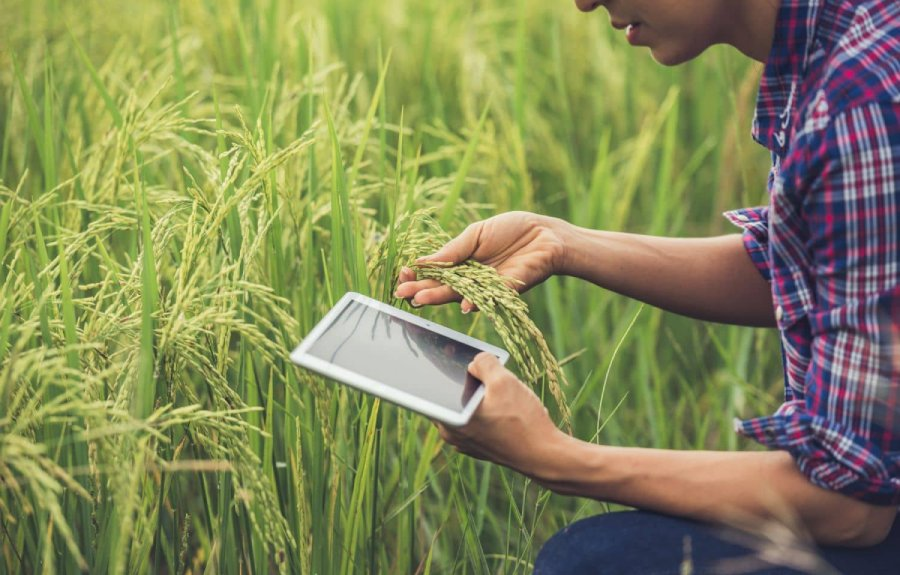tecnico-agroalimentare